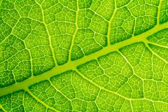 Leaf cell structure. Green Leaf cell structure , leaf texture for pattern and background Stock Images