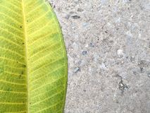 Green leaf on cement floor Stock Photography
