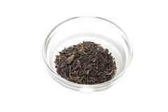 Green leaf Ceylon tea Stock Image