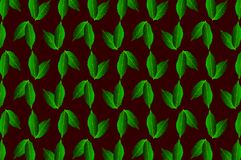 Green leaf chestnut on dark background. Vector pattern, Castanea sativa Royalty Free Stock Photos