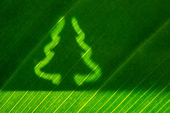 Green leaf with christmas tree shape Royalty Free Stock Photography