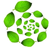 Green leaf circle Royalty Free Stock Images