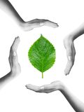 Green leaf in a circle of hands. Green leaf inside a circle of hands Royalty Free Stock Photography
