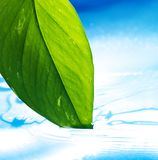Green leaf and clear blue water Royalty Free Stock Images