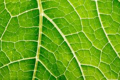 Free Green Leaf Close Up Stock Photo - 118642080