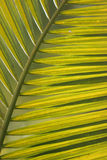 Green leaf close up Stock Photos