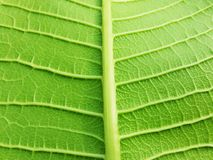 Green leaf. Close up with green leaf, nature Stock Photos