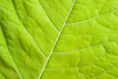 Green leaf close up Stock Photo