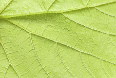 Green leaf close up. Stock Images
