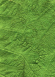 Green leaf close up background stock image