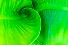 Green leaf close up background. stock images