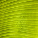 Green leaf. Close up of green leaf background texture Royalty Free Stock Images