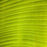 Green leaf. Close up of green leaf background texture vector illustration