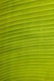 Green leaf. Close up of green leaf background texture royalty free illustration