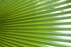Green leaf. Close up of green leaf background texture Royalty Free Stock Image