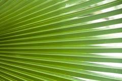 Green leaf. Close up of green leaf background texture stock illustration