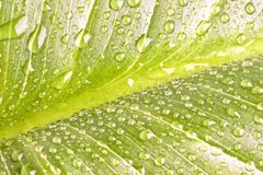 Green leaf close-up with dew drops Royalty Free Stock Photos