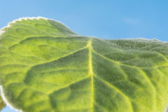 Green leaf close-up illuminated by natural sunlight on a background of sky Stock Photos