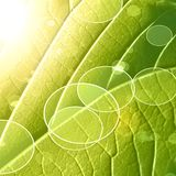 Green leaf. Close up of a green leaf with its veins vector illustration