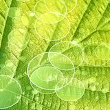 Green leaf. Close up of a green leaf with its veins stock illustration