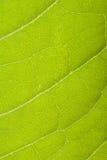 Green leaf close up macro Stock Photos
