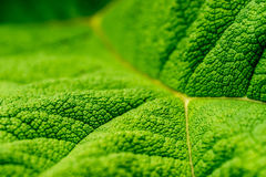 Green Leaf Close Up Photography Stock Photos