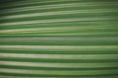 Green leaf close-up, texture, background stock photography