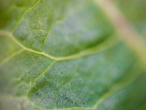 Green leaf close up Stock Image
