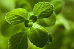Green, Leaf, Close Up, Water Stock Photography