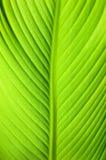 Green leaf closeup stock photos
