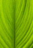 Green leaf closeup macro shot Stock Photography