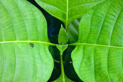 Green leaf closeup plant nature background Stock Photography