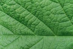 Green leaf closeup Stock Photo
