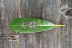 Green leaf with co2 text on black wood background abstract Royalty Free Stock Image