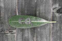 Green leaf with co2 text on black wood background shade abstract Royalty Free Stock Image