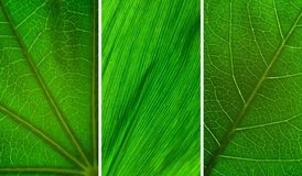 Green leaf collection Royalty Free Stock Photo