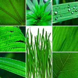 Green leaf collection Stock Photo