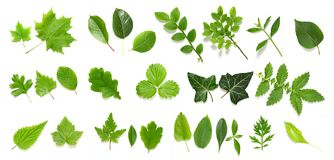 Free Green Leaf Collection Royalty Free Stock Photos - 9641218