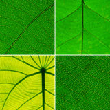 Green leaf collection on background Stock Photos