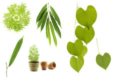 Green Leaf Collection royalty free stock image