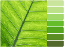 Green leaf and color palette. Color palette series: shades of green royalty free stock image