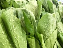 Green leaf for cooking. Stock Images