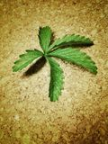 Green leaf on a cork surface Royalty Free Stock Photo