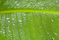 Green leaf covered in droplets Royalty Free Stock Photography
