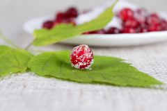 Green leaf and cowberry sprinkled with sugar Stock Photos