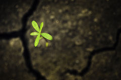Green leaf on crack soil Stock Photos