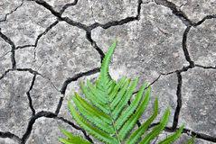 Green leaf on cracked ground Stock Photos