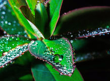Green leaf with crystal water drops Royalty Free Stock Photos