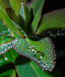 Green leaf with crystal water drops Stock Image