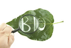 Green leaf with a cut on it the word - bio Stock Photography